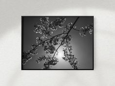 Excited to share the latest addition to my shop: Printable Black and White Tree Photography, Cherry Blossoms White Cherry Blossom, Cherry Blossoms, Black And White Tree, White Cherries, Tree Photography, Home Printers, International Paper Sizes, Poster Size Prints, Printing Services
