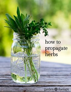 Extend the life of your herb plants this summer by propagating them. This is the perfect way to get your indoor herb garden started before summer ends.