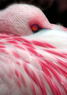 Flamingo's up close are really unnerving... It is like their eyes are staring into your soul