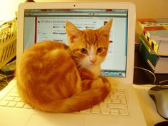 i love laptop #cats