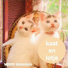 De tweelingzusjes Kaat (rechts) en Lotje (links) Lotje wil later francaise worden en droomt van de prins op het witte paard. Ze is een romanticus in hart en nieren.  Kaat heeft de hersens van het stel, mijmert over filosofie en is gek op dierenweetjes   ...  kaat, lotje, poesjes, kattenlaan 9, studio 100, vpro, kitten, kittens, poes, kat, kattenlaan