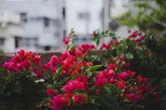 Fukushen Gardens, Okinawan Japan.