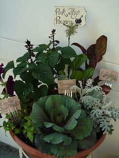 Witch's Herb Garden, perfect for winter months