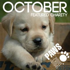Paws for a Cause, October 2014