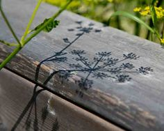 Another Slice of Life: Wild Parsnip on Fence/Shadows
