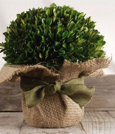Beautiful as a centerpiece or as a decoration on your entry table, this Preserved Boxwood Arrangement measures tall by wide. The natural boxwood is arranged in a clay pot, wrapped in a burlap sheath with a ribbon tie. The boxwood arrangement m Artificial Flower Arrangements, Floral Arrangements, Pottery Barn Hacks, Artificial Birds, Preserved Boxwood, Save On Crafts, Diy Home Decor Projects, Flower Pots, Christmas Decorations