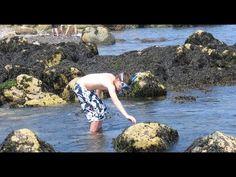 ▶ David Sobel -- New England Aquarium Lecture Series - YouTube