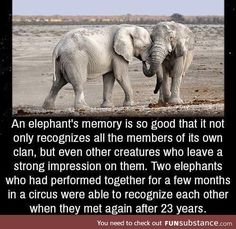 "Ralph Sockman quote about strength - ""Nothing is so strong as gentleness, and nothing is so gentle as true strength. Cute Funny Animals, Cute Baby Animals, Funny Cute, Animals And Pets, Funny Animal Facts, Elephant Facts, Elephant Love, Elephant Quotes, Unbelievable Facts"