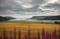 Munlochy Bay, The Black Isle, Highland, Scotland www.landoflight.co.uk — in Munlochy, Highland, United Kingdom.
