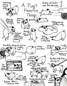 a pugs favorite things