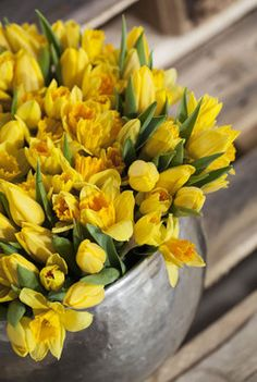 Tulips Flowers, Cut Flowers, Daffodils, Yellow Flowers, Spring Flowers, Planting Flowers, Beautiful Rose Flowers, Beautiful Flower Arrangements, Garden Plants Vegetable
