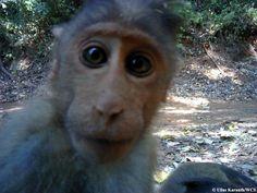 Animal selfies at camera traps