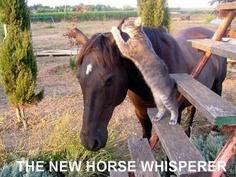 The New Horse Whisperer