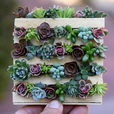 Miniature cuteness!!!  DIY Mini Pallet with succulents just uploaded on our YT/FB!