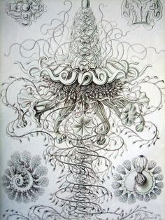 """Jellyfish images by zoologist Ernst Haeckel, from """"World of Interiors"""" magazine, August 1999. photo by blythely via flickr"""