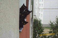 Schwarze Katzen in Bildkategorie KATZEN