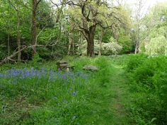 Bluebells Ice Houses, New Forest, Southampton, Hampshire, Winchester, Over The Years, Acre, Woodland, Lawn