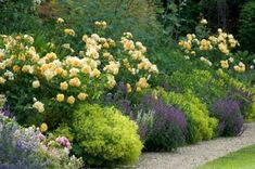 My Favorite Plant Combinations 26