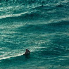Ocean Shark by ►CubaGallery, via Flickr