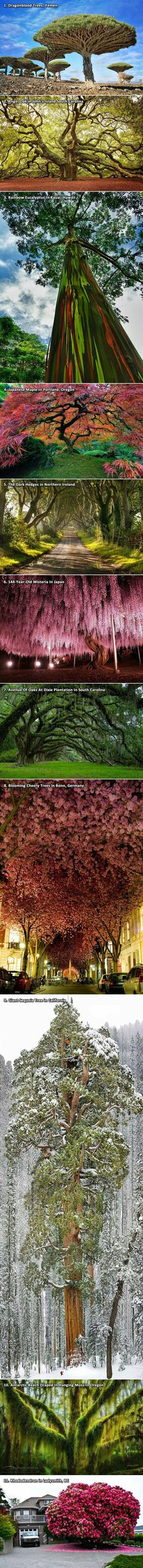 Amazing and beautiful trees around the world