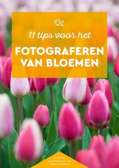 Fotografietips voor bloemen #natuurfotografie #macrofotografie