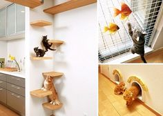 A Japanese firm is offering an apartment filled with cat-friendly features including platforms, tunnels, cat flaps in every door, steps to wooden beams, viewing areas and even a litter tray in the bathroom. 'Cat-proof' surfaces have also been used throughout which are resistant to scratches and easy to clean. via dailymail.co.uk