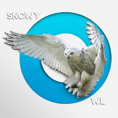 Bubo scandianus. . . #honestwork #infographic #meanincfographic #illustration #negativespace #minimalism #minimal #animal #art #paper #papercut #concept #combination #style #experiment #papercraft #light #shadow #whitespace #typography #fonts #lettering #simple #frame #owls #owl #snowyowl #blue #ice #o