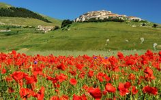 Colours and shades of Castelluccio di Norcia di Ilaria Battaini