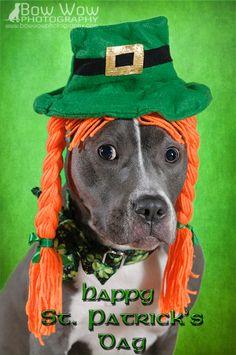Happy Saint Patrick's Day - http://bowwowphotography.com/