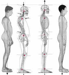 Postural Integration Anatomy