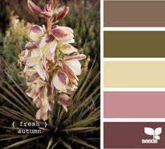 Beautiful color palettes!