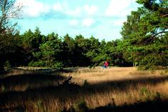 Natuur en cultuur in de Veluwe