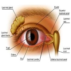 Causes, Symptoms And Treatment Of Dry Eye Syndrome - How To Treat Dry Eye Syndrome | GilsCosmo.com - Shopping made easy!