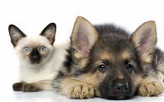 Pra você que perdeu a última feira de adoção, eis que surge uma nova oportunidade de levar um amiguinho pra casa! Um evento da Associação 101 Viralatas!  #FFCultural #FFCulturalEventos #Animais #Pets #Adocao #101Viralatas