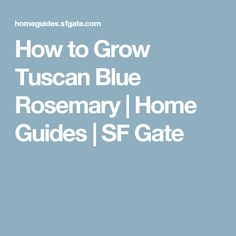 How to Grow Tuscan Blue Rosemary | Home Guides | SF Gate