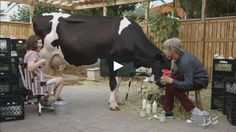 """This is """"PORTLANDIA 503 DIGITAL RAW MILK mov"""" by IFC On-Air on Vimeo, the home for high quality videos and the people who love them."""