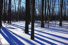 Blue Winter Shadows - Guelph Ontario Canada #art #photography #snow #winter #trees #shadows #forest