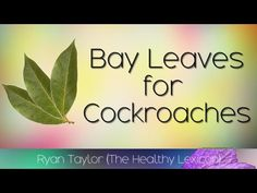 Bay Leaves: for Cockroaches Bay Leaves Uses, Cockroach Repellent, Home Defense, Making Life Easier, Natural Solutions, Animal Quotes, Pest Control, Outdoor Travel, Gardening Tips