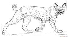 How to draw a bobcat step by step. Drawing tutorials for kids and beginners.