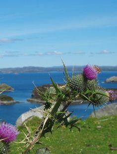 Drumbeg Viewpoint - The Drumbeg Road in Photos - Embrace Scotland UK Scottish Holidays, North Highlands, North Coast 500, Scotland Uk, Route 66, Campsite, Homeland, North West, Biking