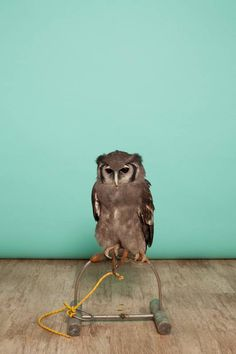 Episode 2 in An Owl An Hour; featuring Gordon