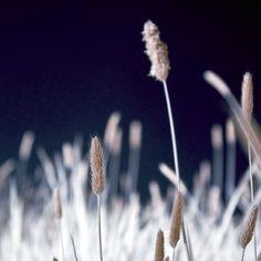 Fotografiert im infraroten Licht