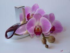 Calvin Klein Euphoria- perfume review on fragrascent.pl #calvinklein #euphoria #perfume #fragrance #review #beauty #scent #perfumy #flakon #perfume_bottle #orchid #orchidea #storczyk #pink Calvin Klein Euphoria Perfume, Perfume Fragrance, Perfume Reviews, Orchids, Perfume Bottles, Pink, Beauty, Fashion, Moda