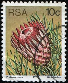 Protea Stamp idea for tattoo? South Afrika, Protea Flower, Postage Stamp Collection, Rare Stamps, Flower Stamp, Photo Wall Collage, African Animals, African Design, African History