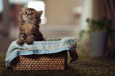 Meet Daisy, the most photogenic kitten possibly of all time