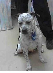 THIS IS REALLY SAD! SHE HAS 1 FACEBOOK SHARE! THAT'S IT!! CAN YOU PLEASE HELP BY SHARING LIKE CRAZY! HER FINAL DAY IS SATURDAY 3/15. Harris County Shelter Houston TX rescue only pit mix female  http://www.petharbor.com/pet.asp?uaid=HRRS.A401145