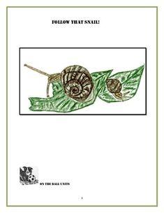 Spider Anatomy Pinterest Worksheets, Free printable