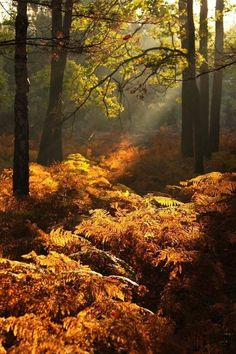 Autumn covered forest