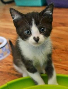 This little kitty has definitely got my heart…