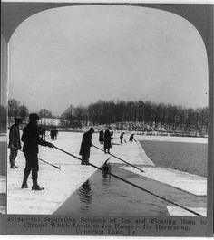 Ice harvesting, Conneaut Lake, Pa.: Separating sections of ice and floating them to channel which leads to ice house